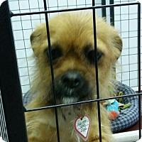 Adopt A Pet :: Star - Mukwonago, WI