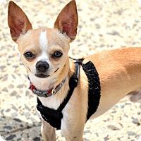 Adopt A Pet :: THUMPER!!! - Mastic Beach, NY