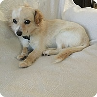 Adopt A Pet :: Daisy - Pleasanton, CA
