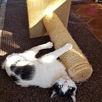 Adopt A Pet :: Harleigh (Slim Pickens) - Monrovia, CA