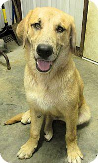 *Maverick - PENDING | Adopted Puppy | Westport, CT ...