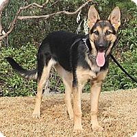 Adopt A Pet :: Jenna - Laguna Niguel, CA