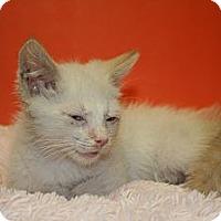 Adopt A Pet :: LOGAN - SILVER SPRING, MD
