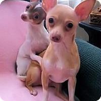 Adopt A Pet :: Betsy/Josie - Mooy, AL