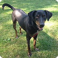 Adopt A Pet :: Baxter-Courtesy Post - North Olmsted, OH