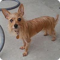 Adopt A Pet :: Moola - Orlando, FL