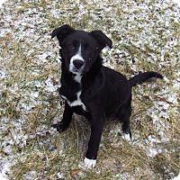 Adopt A Pet :: Roxy - Huntsville, TN