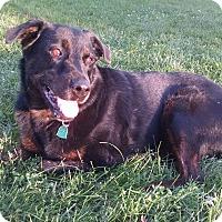 Adopt A Pet :: Nikka - Huxley, IA