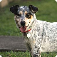 Adopt A Pet :: Gwendoline Christie - Jersey City, NJ
