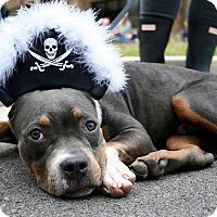 Adopt A Pet :: JUNIOR - Nashville, TN