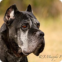 Adopt A Pet :: Zephyr-VA - Virginia Beach, VA