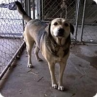 Adopt A Pet :: Sandy - Daleville, AL