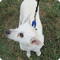 Adopt A Pet :: Archie - Lomita, CA