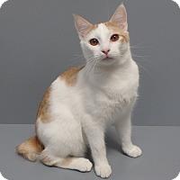 Adopt A Pet :: Carter - Seguin, TX