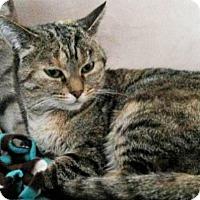 Adopt A Pet :: Mamba - Bruce Township, MI