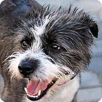 Adopt A Pet :: Antony - Antioch, CA
