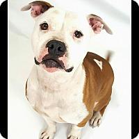 Adopt A Pet :: Montana - Toledo, OH
