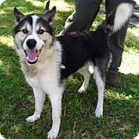 Adopt A Pet :: Duncan - Rockville, MD