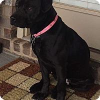 Adopt A Pet :: Lyric - Marietta, GA