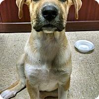 Adopt A Pet :: Wrigley - Harrisonburg, VA