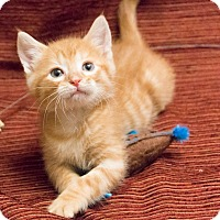 Adopt A Pet :: Honda - Chicago, IL