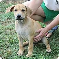 Adopt A Pet :: Skipper - Huntsville, AL
