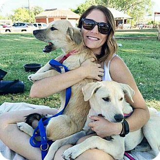 Great Pyrenees/Labrador Retriever Mix Dog for adoption in Broken Arrow, Oklahoma - Ginger