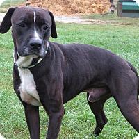 Adopt A Pet :: Kippy - Unionville, PA