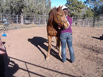 Quarterhorse/Draft Mix for adoption in Bayfield, Colorado - Sedona