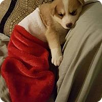 Adopt A Pet :: RALPH - Winnipeg, MB