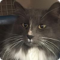 Adopt A Pet :: Safyre - LaJolla, CA