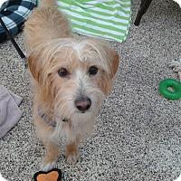 Adopt A Pet :: Toby - Thousand Oaks, CA
