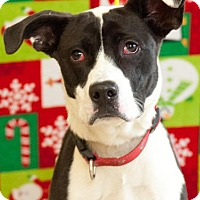 Pointer Mix Dog for adoption in Johnson City, Tennessee - daliah