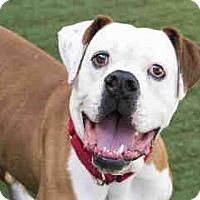 Adopt A Pet :: Rogan - Beverly Hills, CA