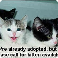 Adopt A Pet :: Kittens-Call for Availability - Lakewood, CO
