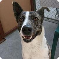 Adopt A Pet :: Livingston *Pet Of The Month* - Canoga Park, CA