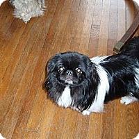 Adopt A Pet :: Drake - Chantilly, VA