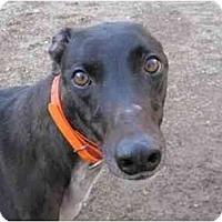Adopt A Pet :: Chad (Mr. Chad) - Chagrin Falls, OH