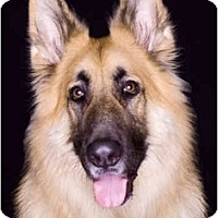 Adopt A Pet :: Kahlua - Hamilton, MT