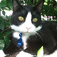 Adopt A Pet :: Walter - Narberth, PA