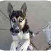 Adopt A Pet :: Patches - Belleville, MI