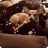 Adopt A Pet :: Sophie Marie - Homewood, AL