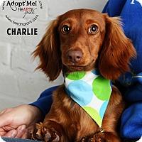 Adopt A Pet :: Charlie - Omaha, NE