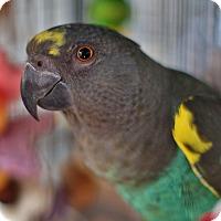 Adopt A Pet :: Fred - Villa Park, IL