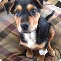 Adopt A Pet :: Lex - Saskatoon, SK