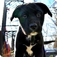 Adopt A Pet :: Buttons - Caledon, ON