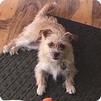 Adopt A Pet :: WINNIE - Mission Viejo, CA