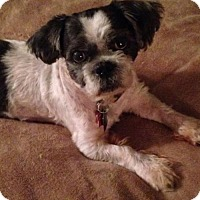 Adopt A Pet :: Winston/Adopted - Eldora, IA