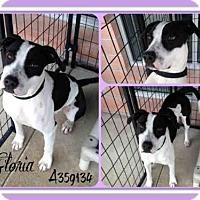 Adopt A Pet :: GLORIA - San Antonio, TX