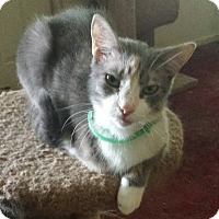 Adopt A Pet :: Addie- only3 legs- - Gaffney, SC